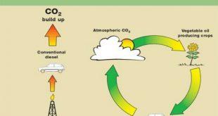 چرخه سوخت های زیستی